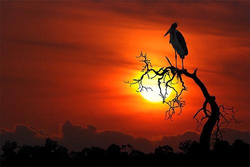 bird+on+tree-+sunset...   Heavens   Pinterest