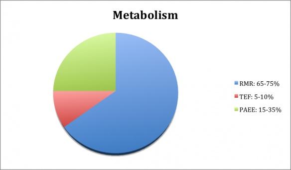 how metabolism works