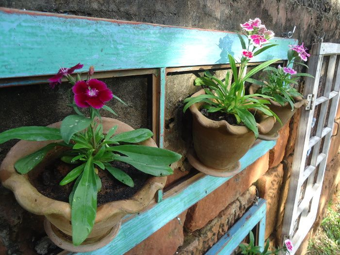 Flores na janela parte 2...