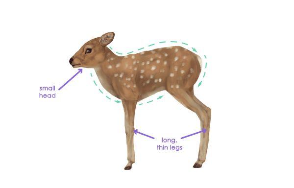 Drawingdeer 2 9 fawn silhouette Deer Pinterest