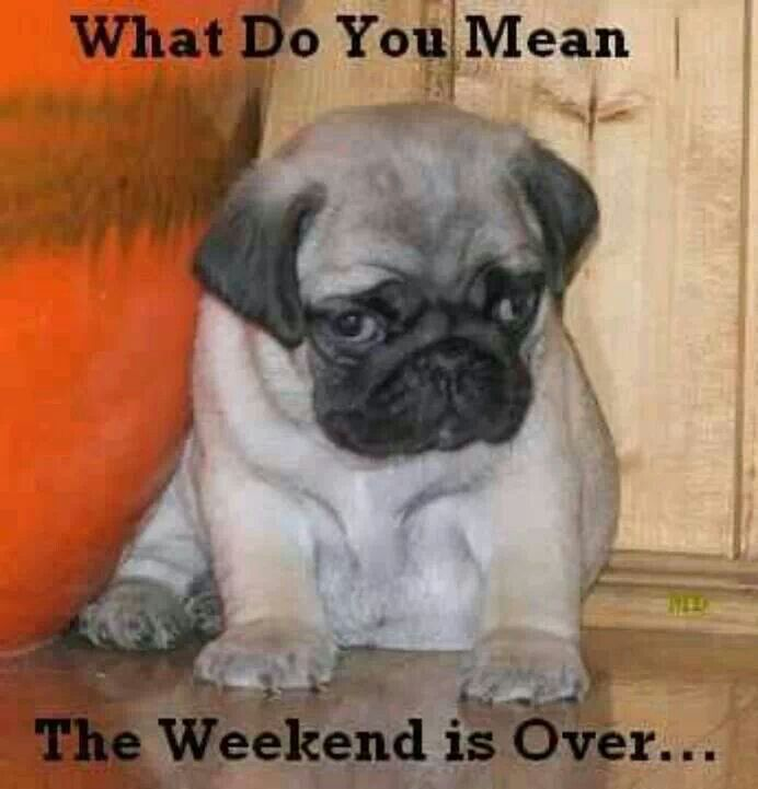 The weekend is over? | Pets | Pinterest