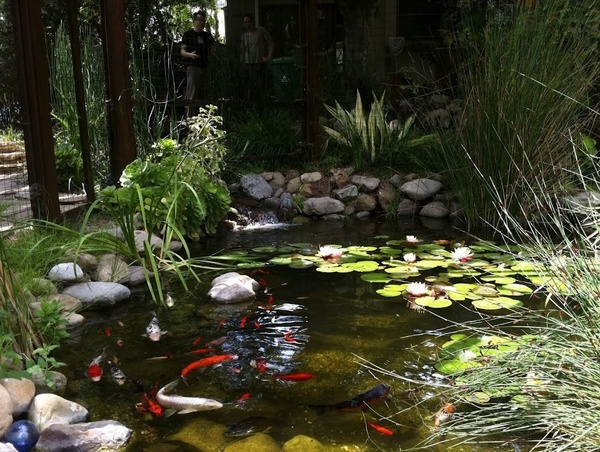 Water gardens koi fish pond backyard treasures pinterest for Koi ponds and gardens