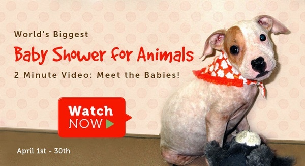 worlds biggest baby shower for animals shower gifts in the form of
