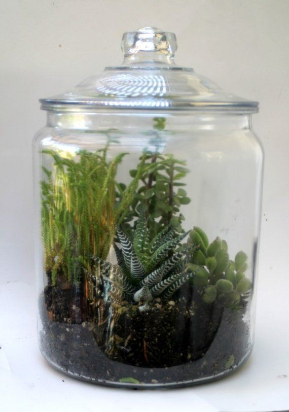huge succulent terrarium kit. Black Bedroom Furniture Sets. Home Design Ideas