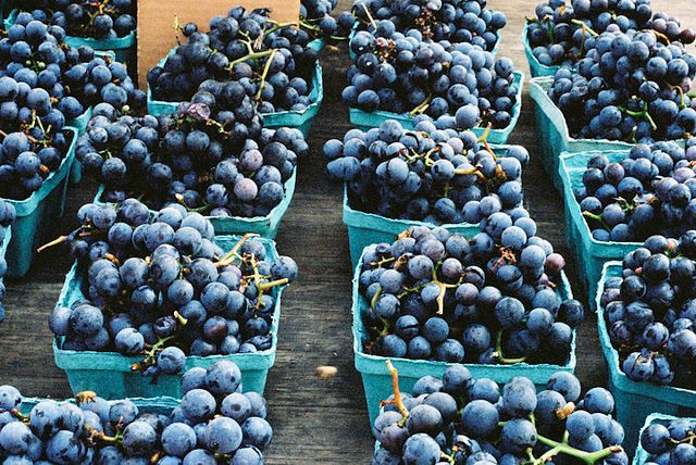 concord grapes | Flickr - Photo Sharing!