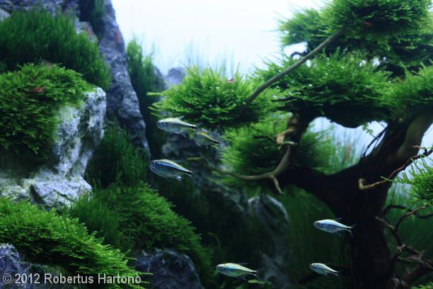 2012 AGA Aquascaping Contest - Entry #154 A fishy idea for the wet ...