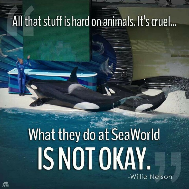 seaworld and peta the need to work together to address the issues of animal abuse From defending horses to protecting orcas: animal-rights historian diane beers on today's seaworld debate.