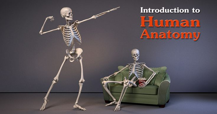 How to Study Anatomy images