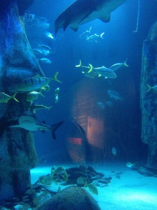 Sea Life London Aquarium [London] Families Pinterest