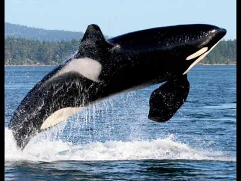 michael jackson songs free willy soundtrack