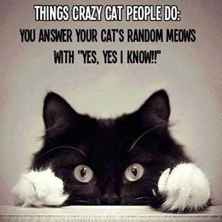 crazy cat people...