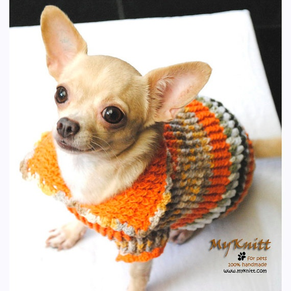 Crochet Dog Sweater Pattern Chihuahua : Adorable Dog Clothing Cute Chihuahua Sweater Orange ...