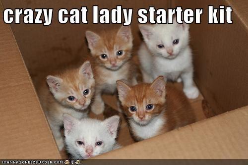 cat urine smell in carpet