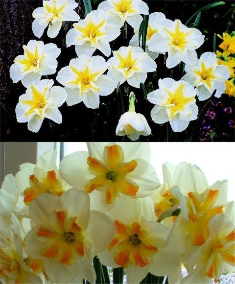flower specials for valentine's day
