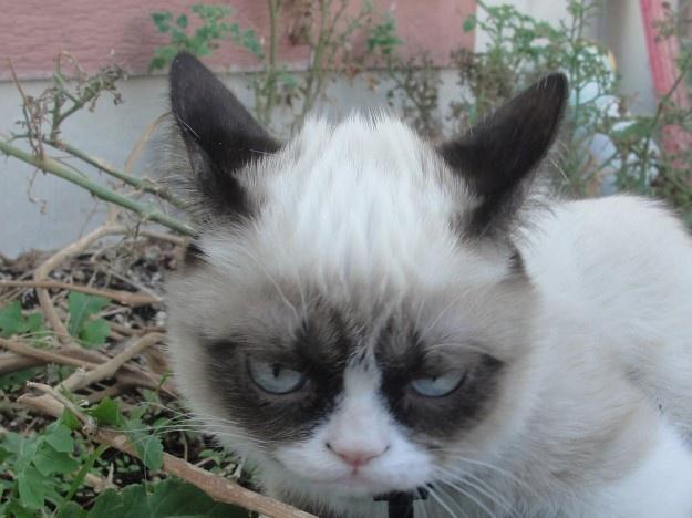Good Night from Grumpy Cat | Favorites | Pinterest
