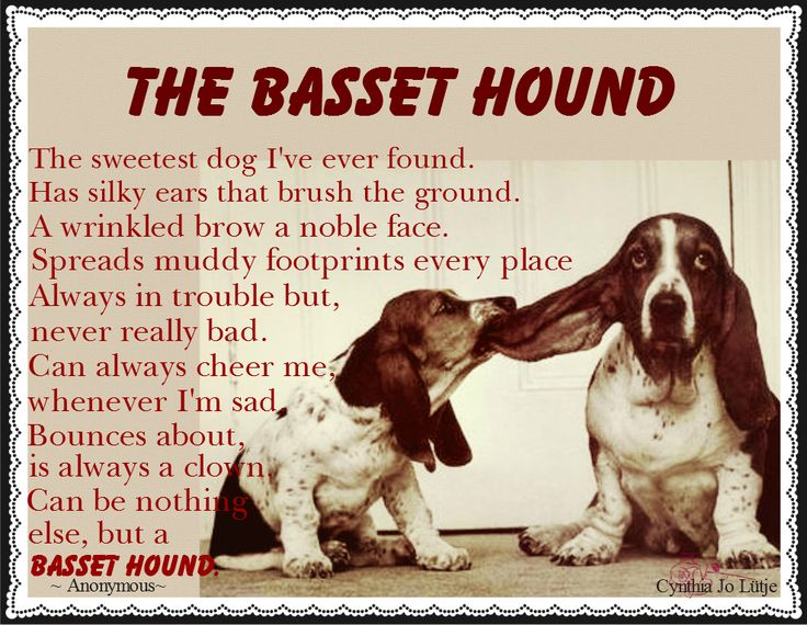 gallery for gt funny basset hound quotes