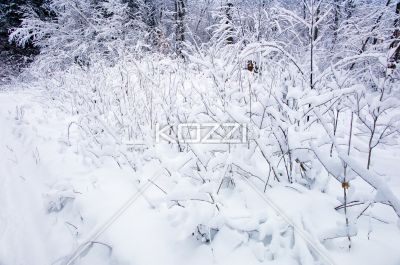 Snow Bushes - Inches of snow on the bushes in Haliburton, Ontario