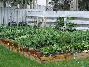 a *small* backyard garden...