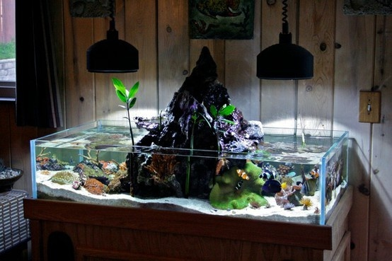 Cool fish tank best freshwater aquarium fish 2017 fish for Awesome fish tanks