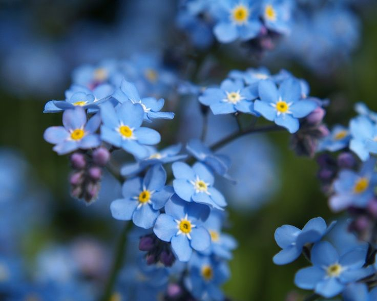 Forget-me-not. 5 things we need NOT forget by Deiter F. Uchtdorf