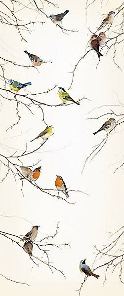 Birds wallpaper murals wallpaper luv pinterest for Bird mural wallpaper