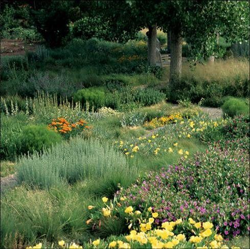 Drought Tolerant Landscape Ideas Gardens Pinterest