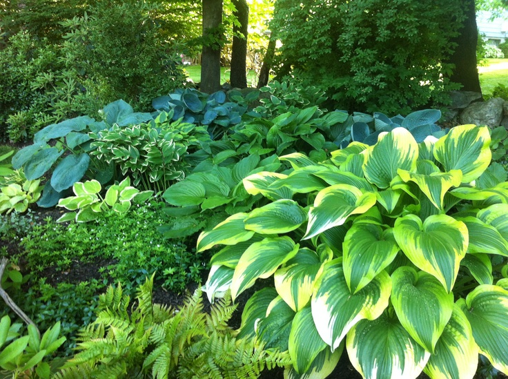 hostas-in-colorful-shade-garden