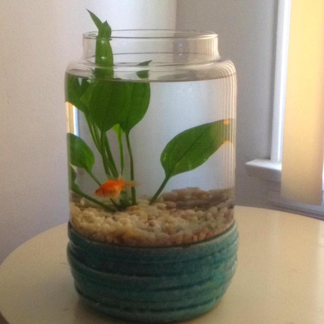 Aquarium in a jar fish pinterest for Fish in a jar