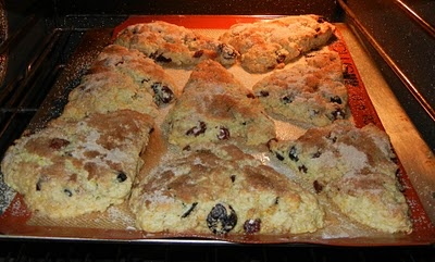 Sour Cherry and Walnut Scones. Really delicious!