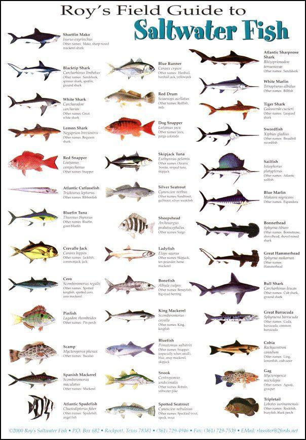 Pet fish types list