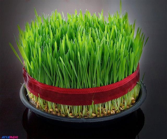 زیباترین و جالبترین سبزه های عروسکی برای عید نوروز عکس