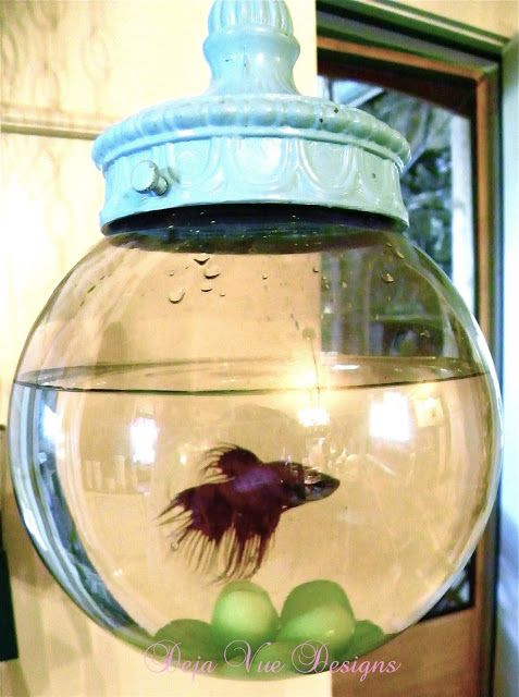 Bowl for a betta fish broken swag to swanky pad for Cool fish bowls