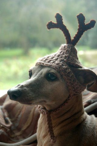 Oh my...a reindeer hat. But this dog looks quite pleased.