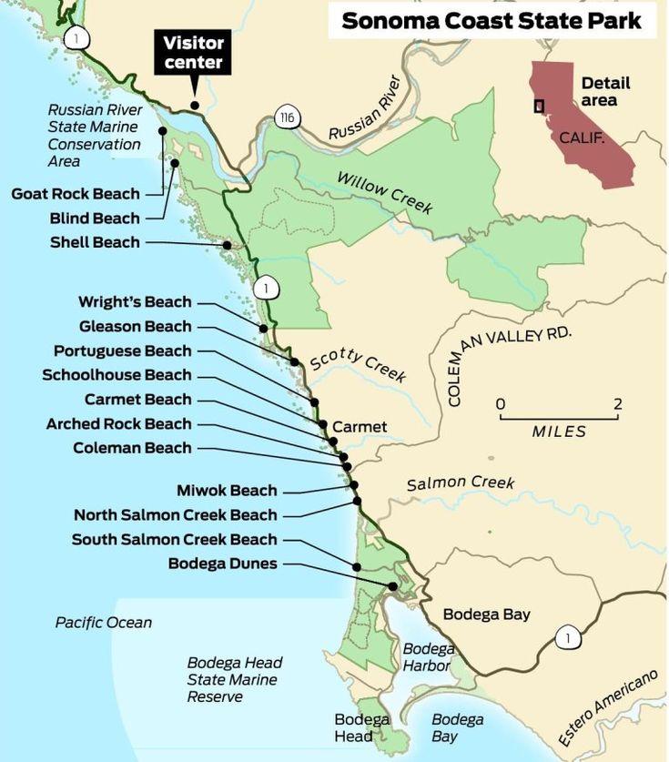 Sonoma Coast State Beach Dog Friendly