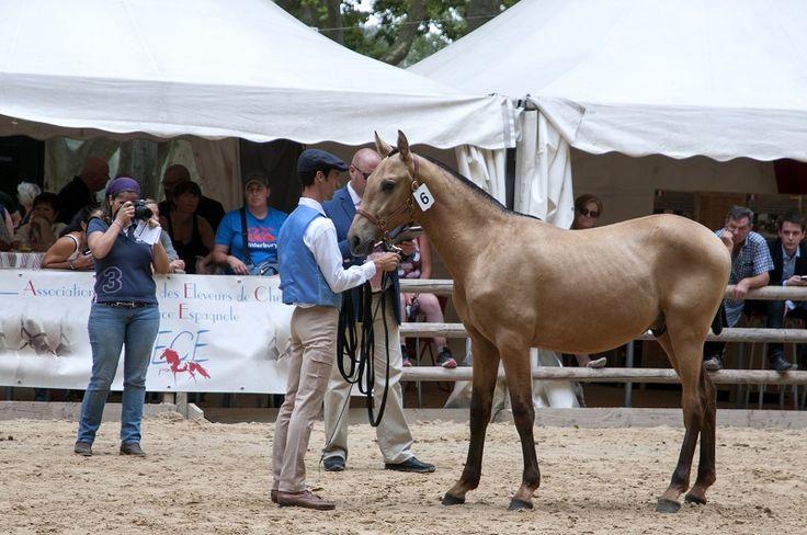 Plus grand rassemblement de chevaux ibériques de France, les Rencontres Équestres Méditerranéennes créent, chaque été, Evènement à Beaucaire.