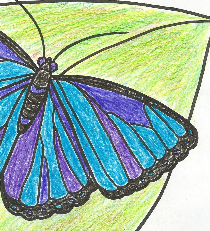 Blue Morpho Butterfly coloring page Fun for Kids Pinterest