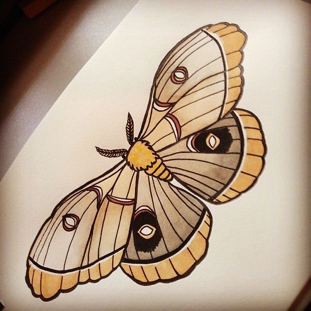 traditional moth tattoo. Black Bedroom Furniture Sets. Home Design Ideas