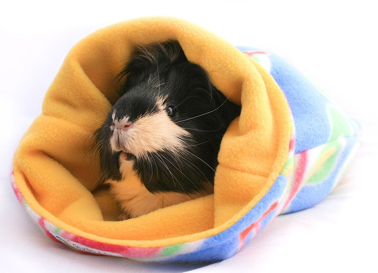 Guinea Pig Sleep-out Bags. | Crafty Pet Items | Pinterest