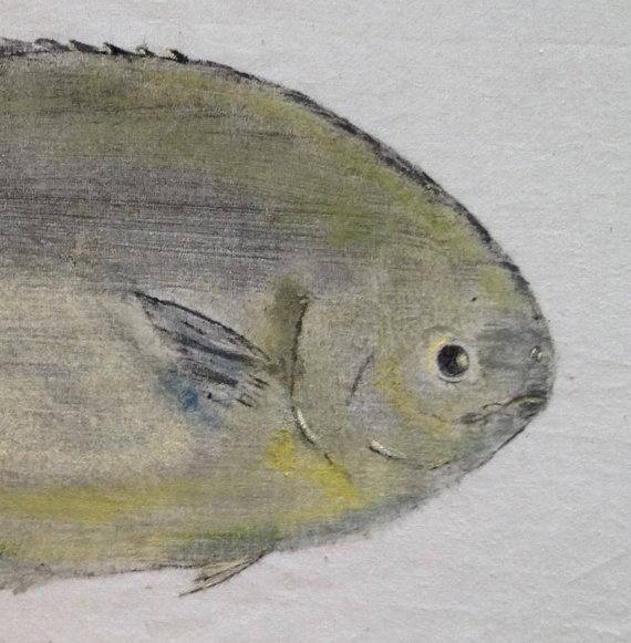 Florida pompano gyotaku fish print fish pinterest for Florida pompano fish