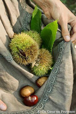 Gathering chestnuts.