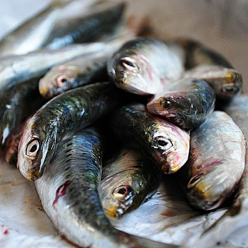 Cool weekend ideas: outdoors grilled sardines Portuguese style. If it ...