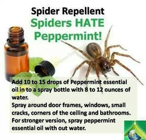 Pin by maneki on misc pinterest for Home remedies to keep spiders away