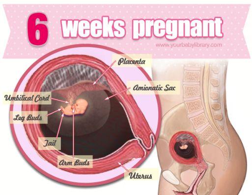 Беременная женщина на сроке 9 недель