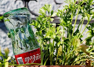 Vintage Glass bottles are easy to come by....stick one full of water in each of your plants before you leave on vacation!