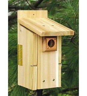 how to build a mountain bluebird house