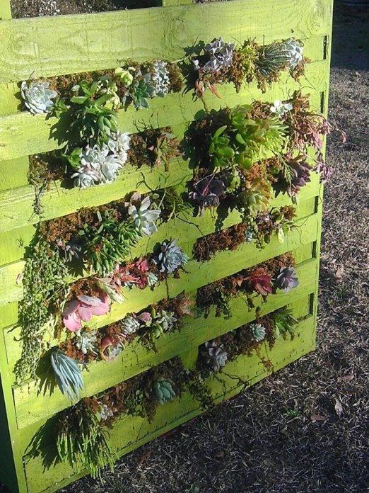 Recycled pallet vertical garden garden pinterest for How to make a recycled pallet vertical garden