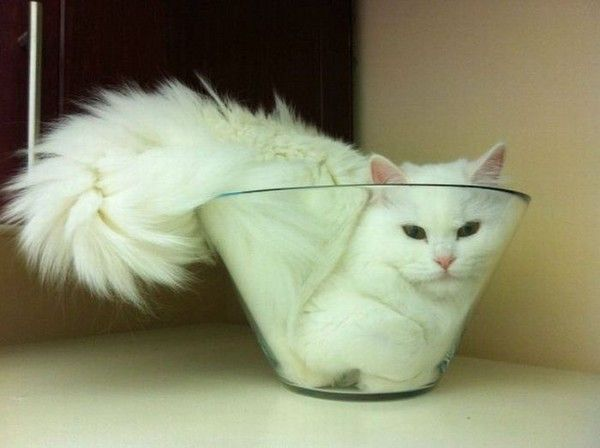 Patricia, if you get a cat it will want to snuggle with your bowls.