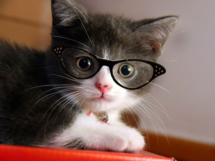 Soooo cute! | Cats with Glasses