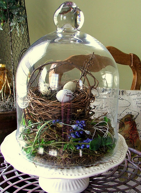a good idea for post holiday decorating cloche pinterest