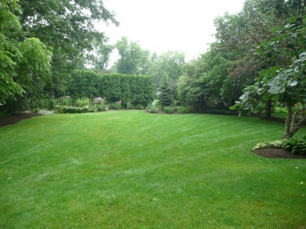Large Empty Backyard : Backyards